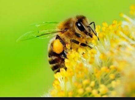 Bienenvölker suchen Grundstück