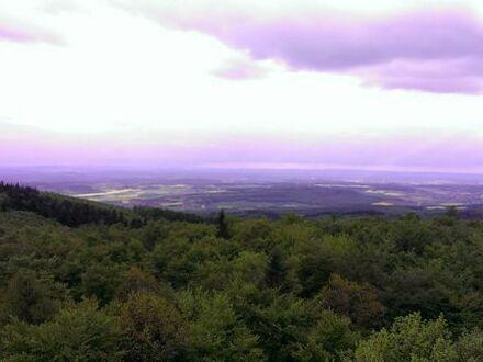 Waldstück Acker oder Wiese Streuobstwiese/Grundstück gesucht