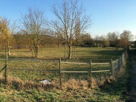 Grundstück mit Pferdekoppel für 3 Pferde inkl. Boxen - Gemarkung Büdesheim -