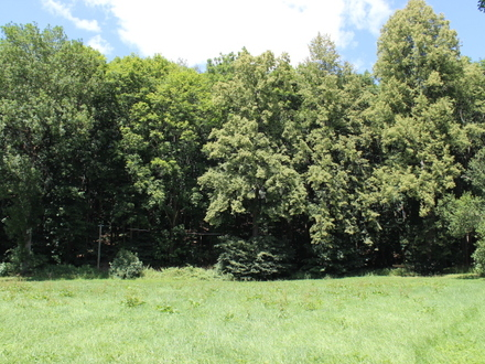 Herrlicher Laubmischwald ca. 1,4 ha mit starken Bewuchs