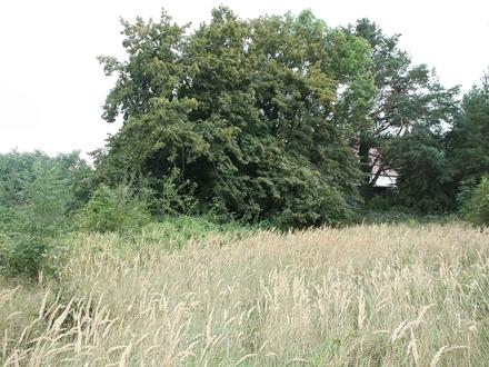 02906 Niesky - Drei Grundstücke in ruhiger Siedlung freuen sich auf Ihr Town & Country Haus und das Lachen Ihrer Kinder