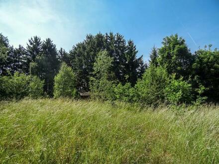 Bauplatz mit altem Baumbestand