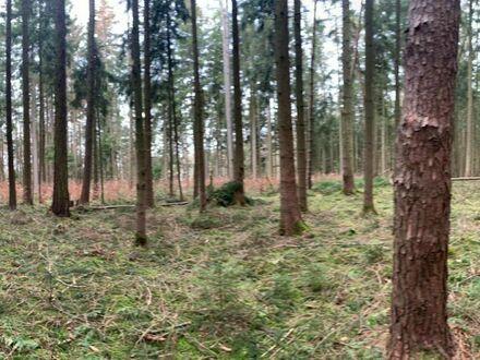 Herrliches Forstwirtschaftliches Grundstück mit kleinem Bachlauf in Todtenweis
