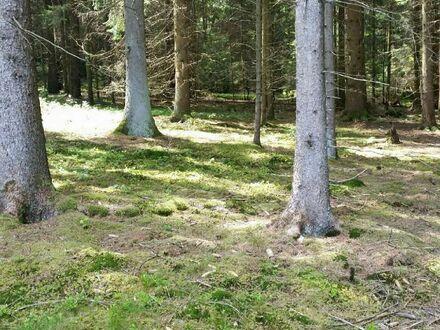 Großes gepflegtes Mischwaldgrundstück gegen Gebot