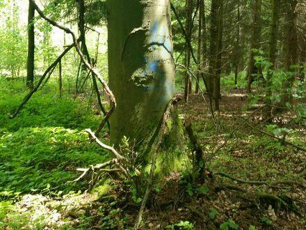 Großes gepflegtes Mischwaldgrundstück