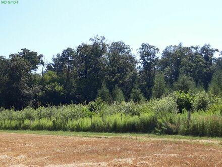 Auch für Kapitalanleger, Erstaufforstung 40100m² großes Mischwaldgrundstück zu verkaufen.