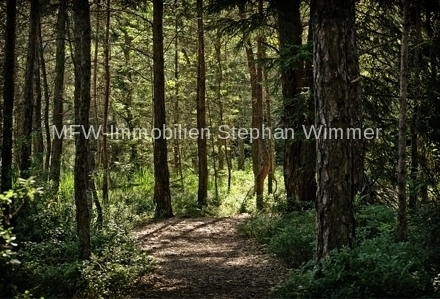 LDS - Wald aus privatem Bestand