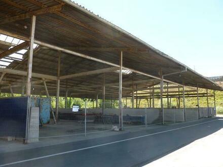 Lagerhallen in gefragter Lage zu vermieten