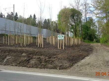 Freizeitgrundstück mit Hütte und schöner zufahrt, 5000 m2 vom Feinsten mit Wald