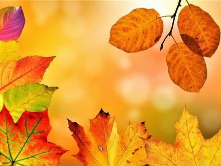 Herbst-AKTION! Nur für KURZE ZEIT!