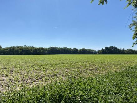 Ca. 6,3 ha Ackerland in drei Parzellen und 3460 m² Waldfläche in Haren-Wesuwe zu verkaufen