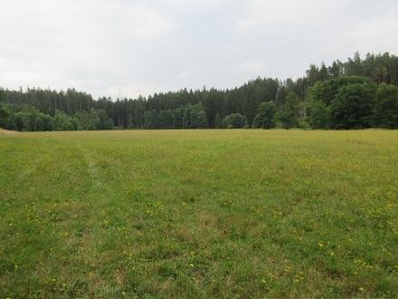 Drei großzügige, nebeneinander liegende Wiesenflächen - geeignet für Weidetierhaltung, nahe der Waldnaab