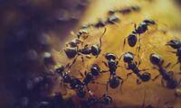 Die besten Mittel gegen Trauermücken, Ameisen und Co.