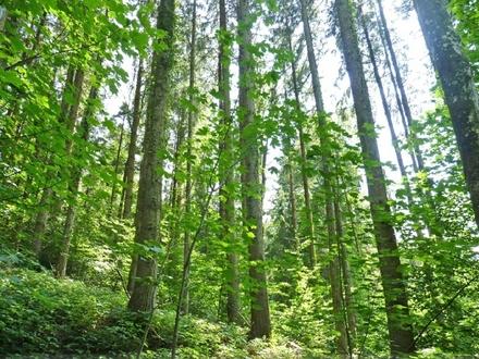 Wald in der Nähe von Bad Endorf