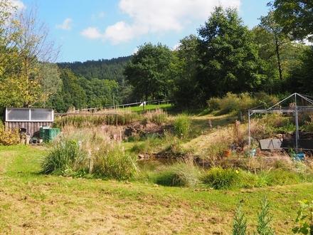 Freizeitgrundstück mit Teich, in ruhiger Lage von Hilchenbach - Oberndorf