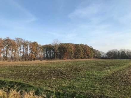 Ca. 2,6 ha Ackerland gegen Höchstgebot in Groß-Mimmelage/Badbergen