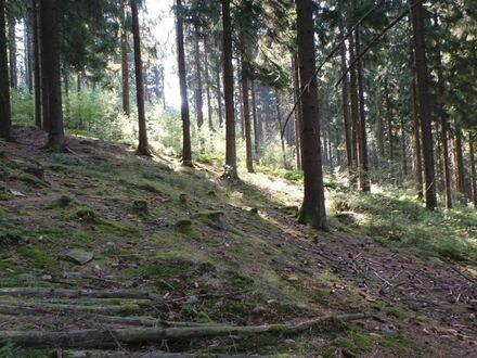 über 8 ha Wald mit gutem Mischbestand