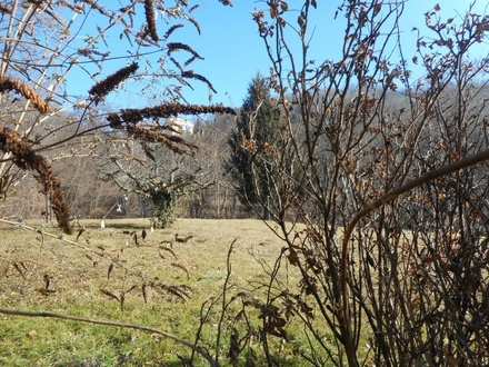 Rarität Geidorf traumhaftes teilbares Baugrundstück Süd-Höhenlage Schloßbergblick