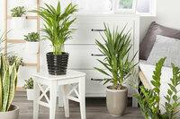 Mehr Grün für ein gutes Wohnklima