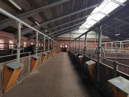 Gnadenhof * Alpakazucht * Tierhaltung * Tier-Training * Hier ist alles möglich