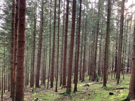 Waldgrundstück in Döllnitz bei Leuchtenberg