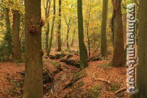 Waldgrundstück in Geeste