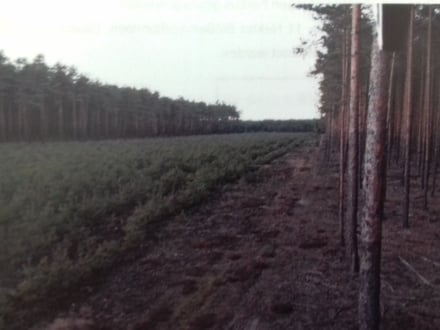 126 ha Wald, EJ Hochwild