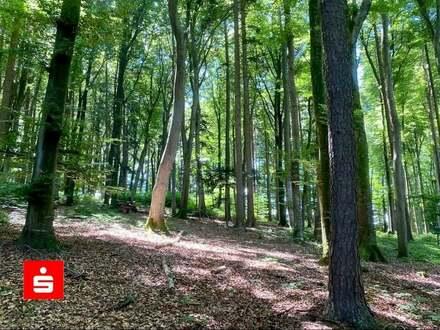 Waldgrundstück!