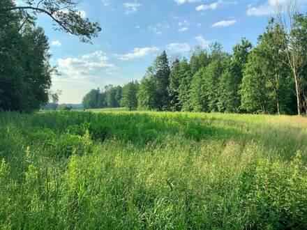 Ökologische Ausgleichsfläche nahe Ranoldsberg