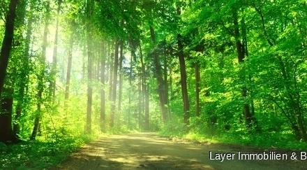 LAYER IMMOBILIEN: Sehr ordentlich gepflegtes Waldgrundstück bei Landsberg *ohne Käferbefall*