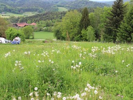 Grundstück Fürstenstein