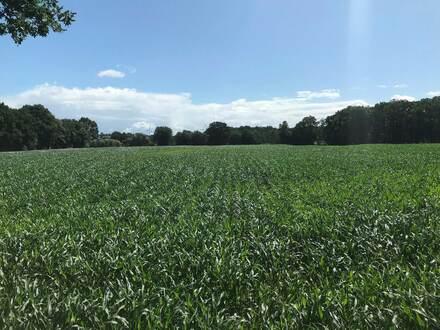 57.443 m² Landwirtschaftliche Fläche in Essen(Oldb.) gegen Höchstgebot