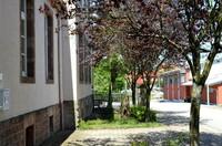 Riedelberg glänzt mit natürlicher Schönheit und Jakobsweg