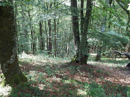 Forstwald Gemarkung Schönfeld
