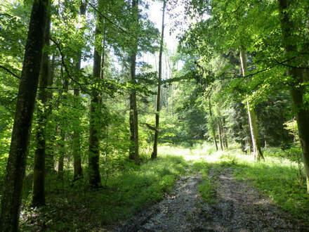 Waldfläche in der Nähe von Aschau am Inn, reduzierter Kaufpreis
