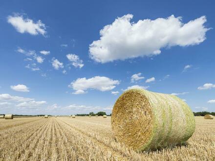 Gegen Gebot! Landwirtschaftliche Fläche in Visbek
