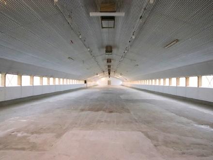 1200 m² Lagerhalle in Münster Handorf