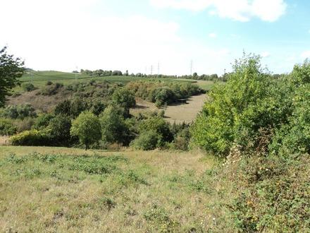 Günstiges Wiesengrundstück in Norheim ab sofort zu veräussern.