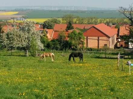 Für Pferdeliebhaber! Liebevoll sanierter Reiterhof mit weitläufigen Grünflächen in Dingelstedt!