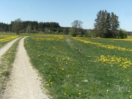 Landwirtschaftliche Wiese bei Altusried