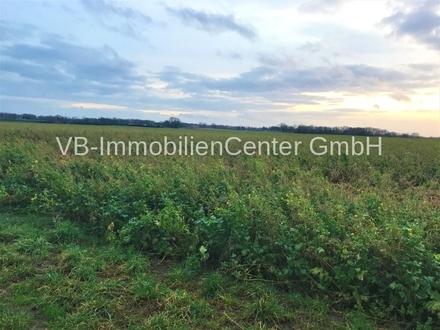 Landwirtschaftliche Fläche in Ilvese