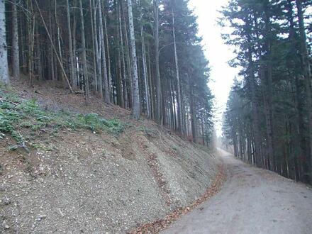 *Gesunder Mischwald am Sulzberg/Bad Feilnbach* Ideal als Kapitalanlage, als Ausgleichsfläche oder aber zur sofortigen Holzernte…
