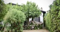 Kleine Bäume für den kleinen Garten – Diese Bäume eignen sich
