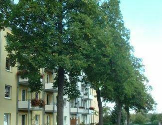 2 Zi.-Wohnung mit Balkon und EBK