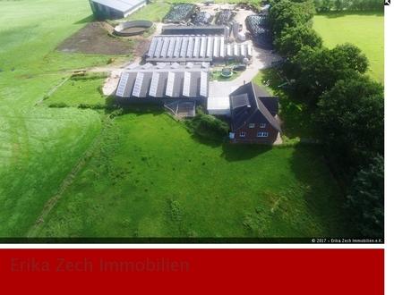 Milchviehbetrieb mit 54 Ha Land in Nordfriesland
