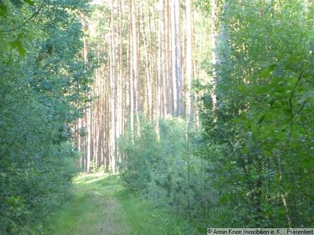 Knapp 20 ha Waldfläche, davon 5 ha Acker/Grünland in Brandenburg