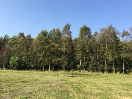 GEGEN GEBOT - Ca. 1 ha Wald in Westrhauderfehn!!