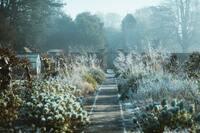 5 Tipps: Den Garten winterfest machen