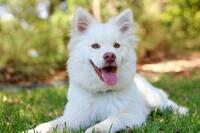 Hundegebell in der Nachbarschaft: Ruhestörung?