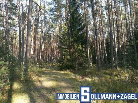 1,6 ha Nadelwald im Fränkischen Seenland nahe Röttenbach mit guter Zufahrt